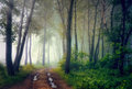 Mystical forest a foggy day in Stock Image