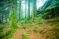 Mystical forest high resolution photo of deep Royalty Free Stock Photos