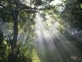 Mystical garden Stock Images