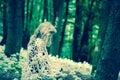 Mystical girl in dark woods Royalty Free Stock Photo