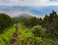 Mystical path in misty mountains the Royalty Free Stock Image