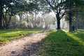 Mystical path in tropical forest Royalty Free Stock Photo