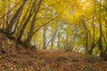 Mystical place in autumnal forest foggy Royalty Free Stock Photography