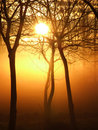 Mystical sunrise Royalty Free Stock Photos