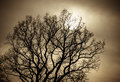 Mystical tree Royalty Free Stock Photo
