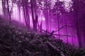 Myth forest mystic trees in violet fog Royalty Free Stock Images