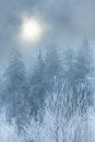 image photo : Fog in winter forest