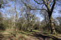 Nagshead rspb reserve forest of dean gloscestershire april Royalty Free Stock Photo