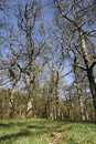 Nagshead rspb reserve forest of dean gloscestershire april Stock Photos