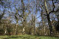 Nagshead rspb reserve forest of dean gloscestershire april Royalty Free Stock Photos