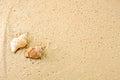 Nahaufnahme von meeresschnecken im sand strand Royalty Free Stock Images