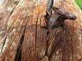 Nail and rotten wood macro view of rusty in Royalty Free Stock Photos