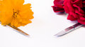 Nail scissors with flowers on white background Royalty Free Stock Photo