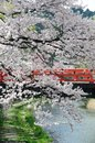 Nakabashi bridge takayama japan cherry blossom at red Royalty Free Stock Images
