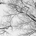 Naked branches tree in early spring Royalty Free Stock Image