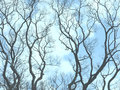 Naked branches of trees Stock Image