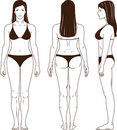 Naked standing woman vector Stock Image