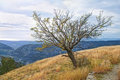 Naked tree in autumn mountains Royalty Free Stock Photo