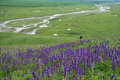 Nalati grassland located in xinjiang cina Royalty Free Stock Photography