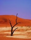 Namibië sossusvlei this picture was shot in the in the namibdesert in namibia Stock Photography