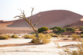 A namibian landscape at sossusvlei Royalty Free Stock Images