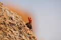 Namibian rock agama planiceps at the greater spitzkoppe namibia Royalty Free Stock Images