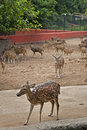 Nandankanan zoological park deer breeding centre at became the first zoo in india to join world association of zoos Royalty Free Stock Images