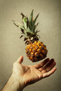 Nano pineapple nature and man food lightness a flying over an open hand of healthy concept vintage background Royalty Free Stock Image
