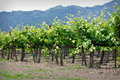 Napa Valley California Stock Photography