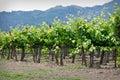Napa Valley California Royalty Free Stock Photo