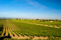 Napa Valley Vineyard Royalty Free Stock Photography
