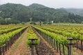 Napa Valley vineyard rows Royalty Free Stock Photo