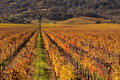 Napa Valley Vineyards in Fall Stock Photography