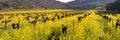 Napa Valley Vineyards And Spri...