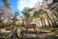 Nara deer roam free in nara park japan for adv or others purpose use Stock Image