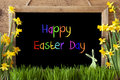 Narcissus, Bunny, Colorful Text Happy Easter Day