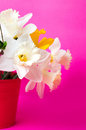 Narcissus flowers in red bucket Royalty Free Stock Photo