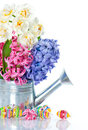 Narcissus and hyacinth. colorful spring flowers Stock Photo