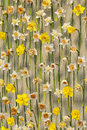 Narcissus on metal net Royalty Free Stock Photo