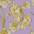 Narcissus seamless background Royalty Free Stock Photos