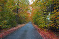 An narrow autumn leafy lane in scotland a quiet country with the leaves falling as sets Stock Photography