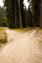 Narrow dirt road leading to two different track along trees in the forest Royalty Free Stock Images