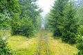 Narrow gauge railway in the forest Stock Image