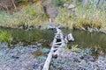 Narrow Old Wooden Bridge Acros...