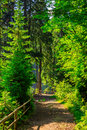 Narrow path in forest with small wooden fence turn to the right mountain a coniferous near slope of trail backlight Royalty Free Stock Image