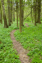 Narrow path through spring forest Royalty Free Stock Photo