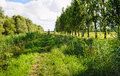 Narrow riding path through a Dutch nature reserve Royalty Free Stock Photo