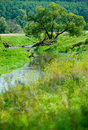Narrow river in russia landscape of a Stock Photography