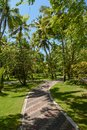 Narrow road among beautiful tall palm trees at the tropical island at Maldives Royalty Free Stock Photo