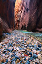 Narrows of the Virgin River Royalty Free Stock Photography